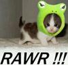meow-meo